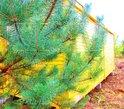 Деревянная бытовка пгт. Монино фото